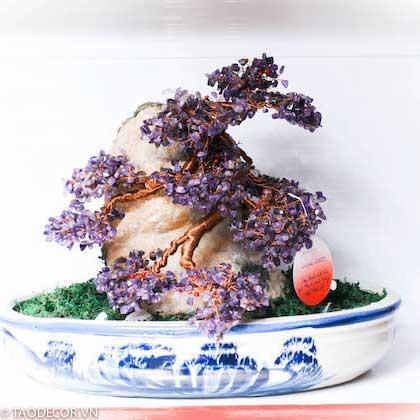 Mua cây bonsai nhỏ tặng sếp
