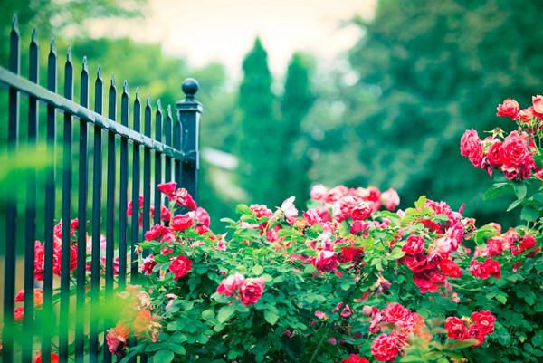 trang trí hàng rào