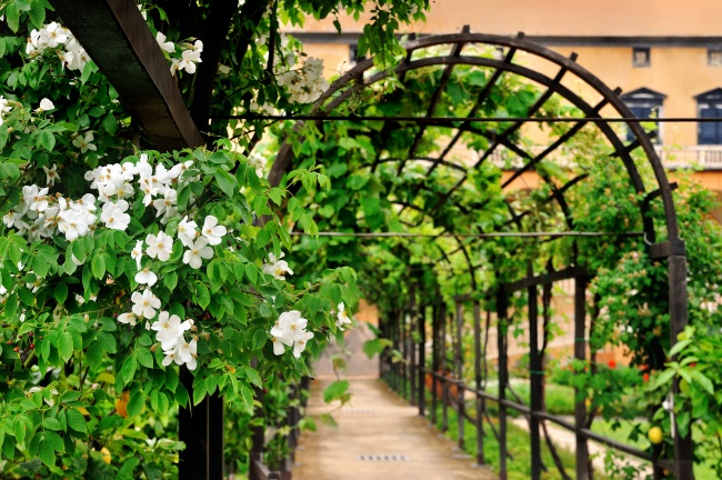 Trồng cây hoa leo vừa tiết kiệm không gian lại tạo nên một khung cảnh lãng mạn và thơ mộng không tưởng. Khu vườn này chẳng khác nào lối vào của một cung điện hay biệt thự xa hoa nào đó.