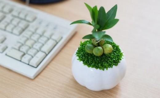 Quà tặng có thể trang trí bàn làm việc của sếp