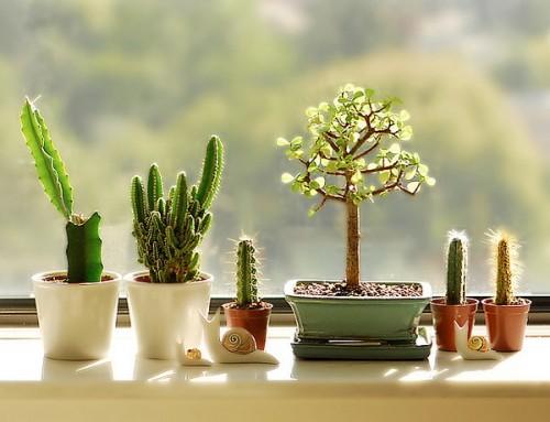 Chọn loại cây cảnh nhỏ để trang trí nơi làm việc cho sếp