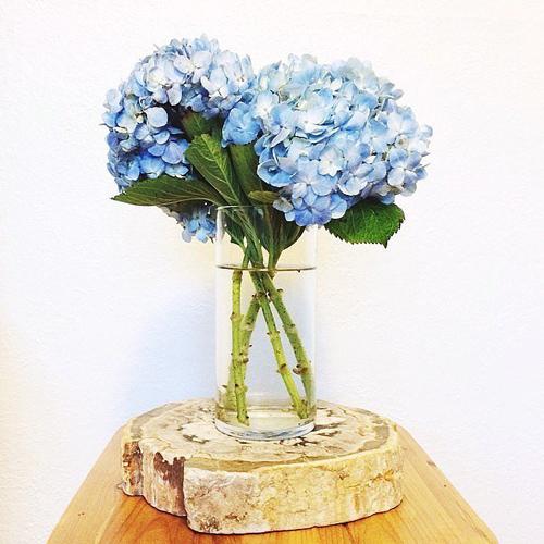 Với các loại hoa lớn như cẩm tú cầu, chỉ cần vài cành nhỏ là đủ tạo thành bình hoa đẹp.