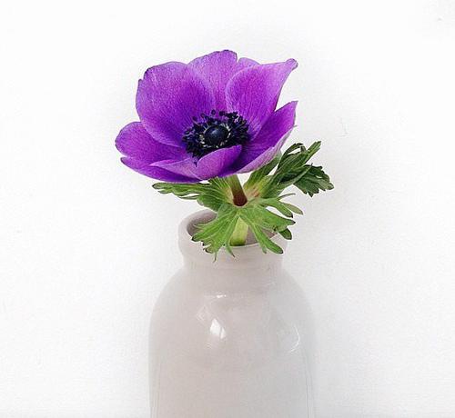Bông hoa trong vườn hoặc thừa có thể tạo nên một bình trang trí trên bàn.