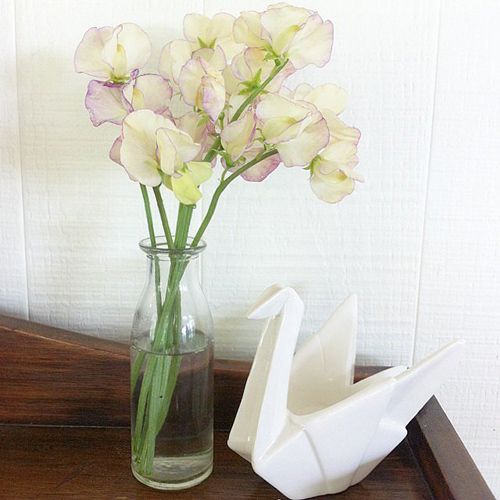 Một bình nước ngọt, bình sữa không dùng nữa có thể tận dụng làm bình hoa.