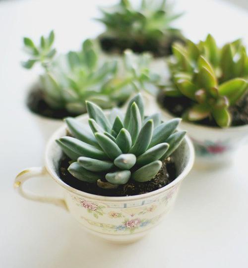 Có thể dụng trồng những cây hoa đá, xương rồng nhỏ