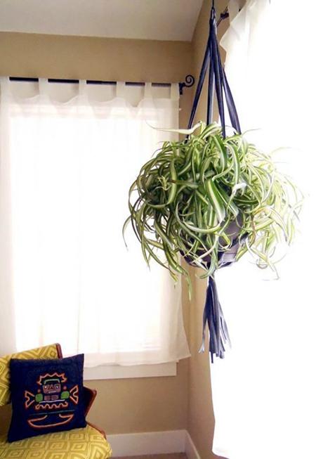 Cây cỏ mẫu tử