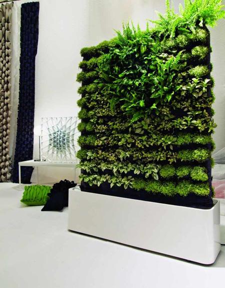 Một bức tường với cây dương xỉ