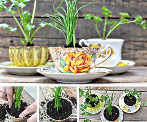 Những tách trà có thể trồng cây